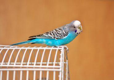 Freiflug bei Vögeln - was gibt es zu beachten?