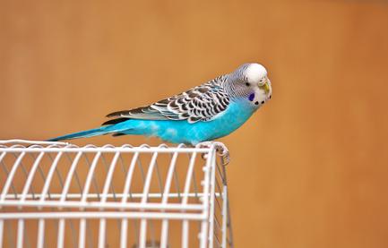 Freiflug Vogel