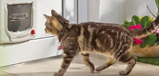 Fressnapf Katzenklappenaktion