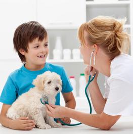 Wie ihr den besten Tierarzt findet