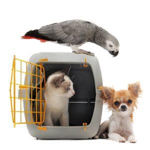 richtige transportbox f r kleine hunde und katzen. Black Bedroom Furniture Sets. Home Design Ideas