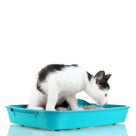 Katzenklo: Tipps für das stille Örtchen