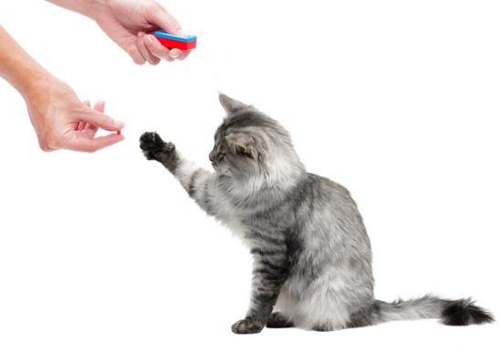 Dank Leckerlis Katzen Tricks beibringen