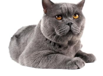 Spezielle Reiniger bei Unsauberkeit von Katzen nutzen