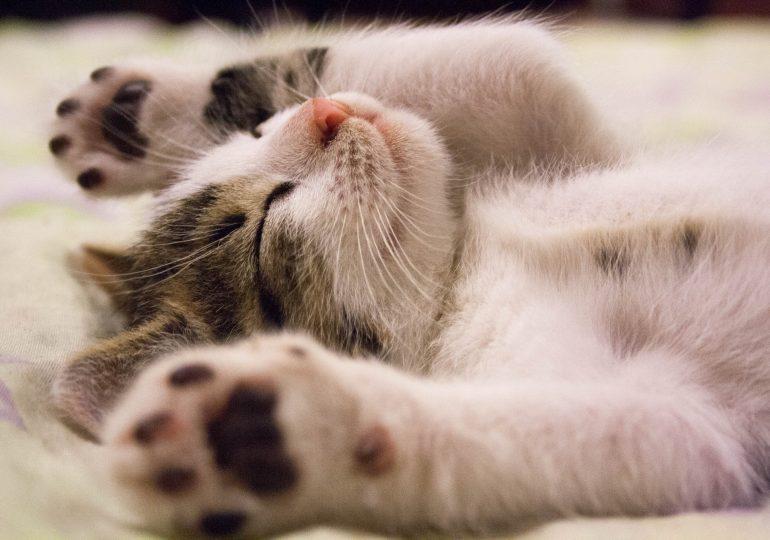Worauf müssen Tierliebhaber bei einer guten Katzennahrung achten?